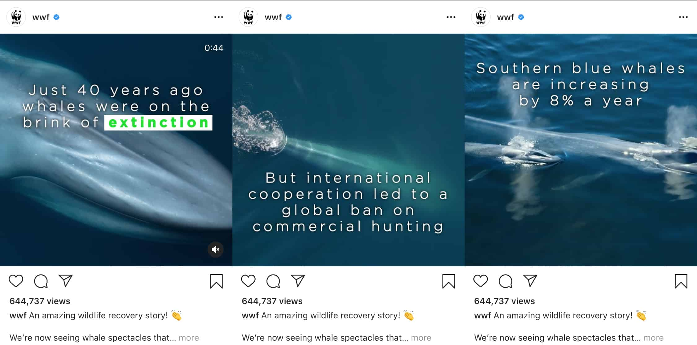 WWF instagram video with text overlay